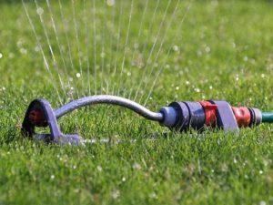 Für die richtige Rasenpflege den Rasen bei Trockenheit wässern
