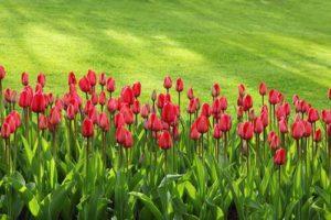 Was kann man tun, dass der Rasen im nächsten Frühjahr wieder perfekt ist?