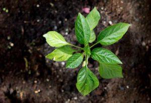 Ein gut bearbeiteter Boden sorgt für üppiges Pflanzenwachstum
