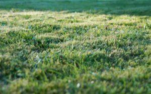 Rasen mulchen - tut dem Rasen gut