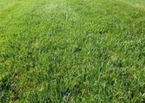 Der Rasen braucht im Frühjahr eine besondere Pflege