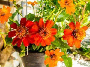 Terrasssendekoration mit Blumen