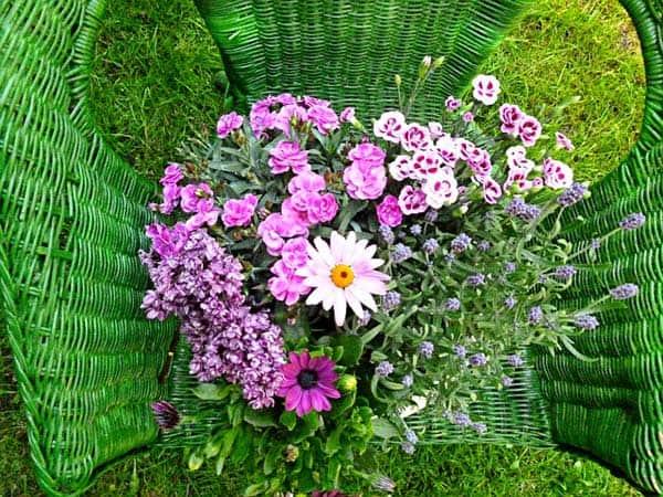 Blumen im Rattanstuhl