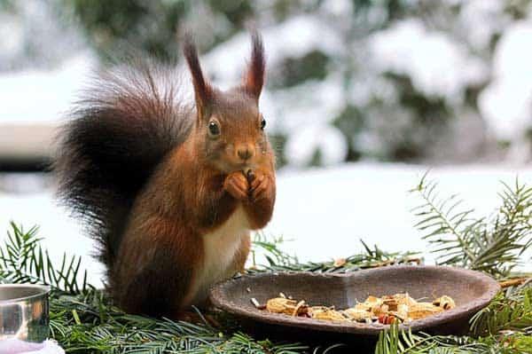 Zu den Gartenarbeiten im Winter gehört auch das Tiere füttern