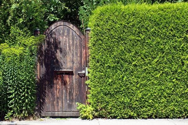 Sichtschutzmaßnahmen für den Garten - immer wieder ein wichtiges Thema