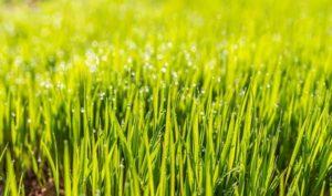 Allein für den Rasen gibt es viele Gartengeräte
