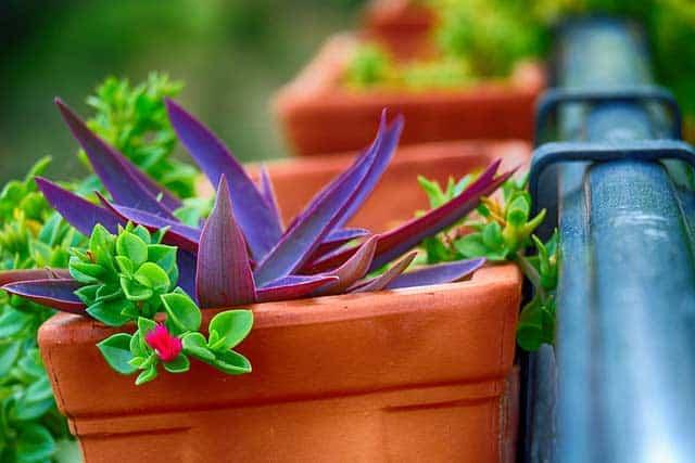 Balkon Pflanzen in Kästen